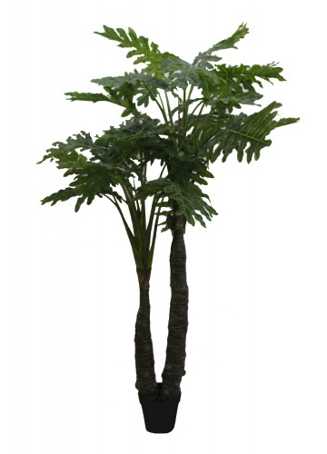 86 Inch Philodendra Tree