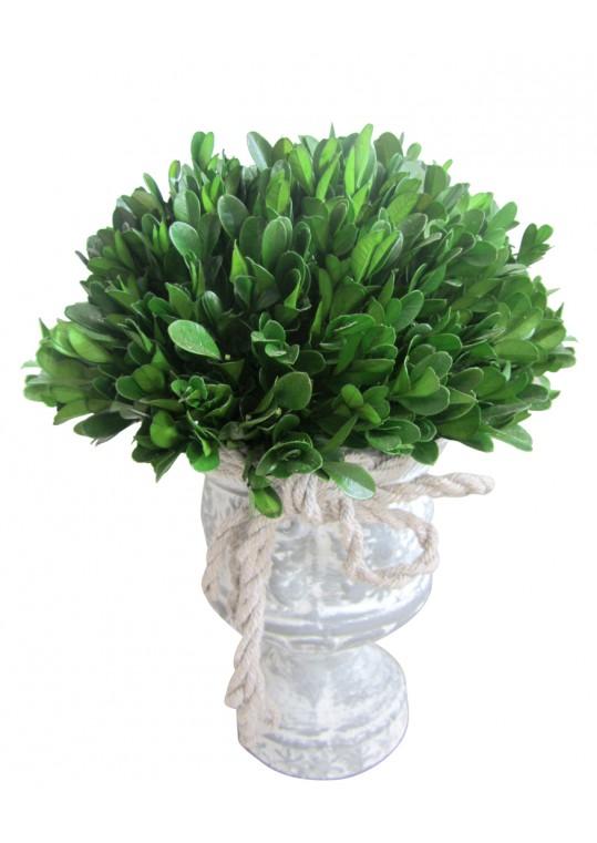 12 Inch Holly & Boxwood Topiary