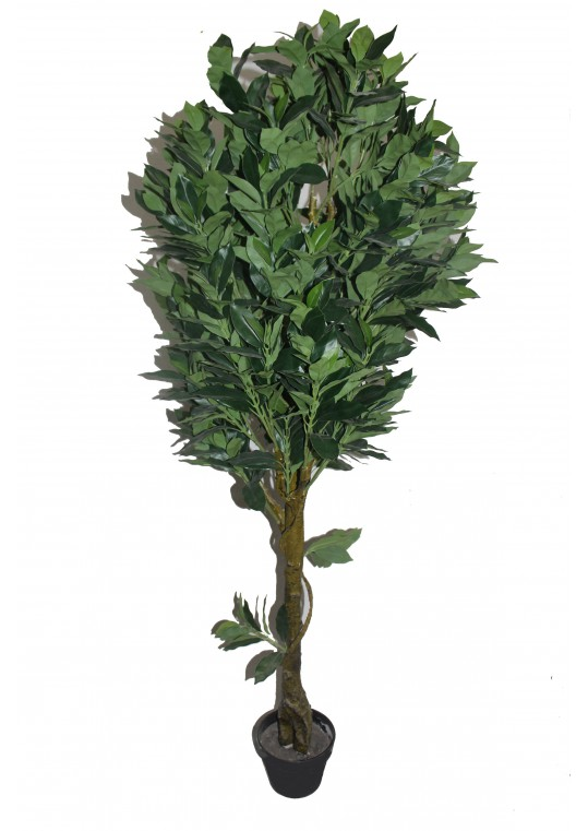 65 Inch Fortune Tree