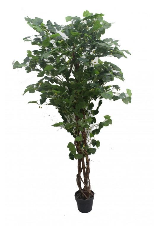 70 Inch Ginkgo Tree